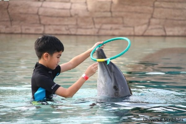Travelling with Kids: Swim With Dubai Dolphins