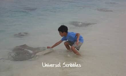 Travelling With Kids: Feeding Stingrays In Maldives